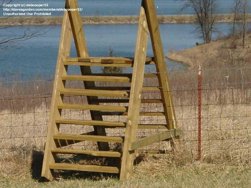 Photo Of How To Build A Ladder Over A Fence Fence