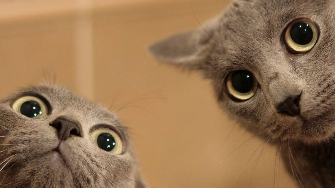 Suara Kucing Meow Youtube