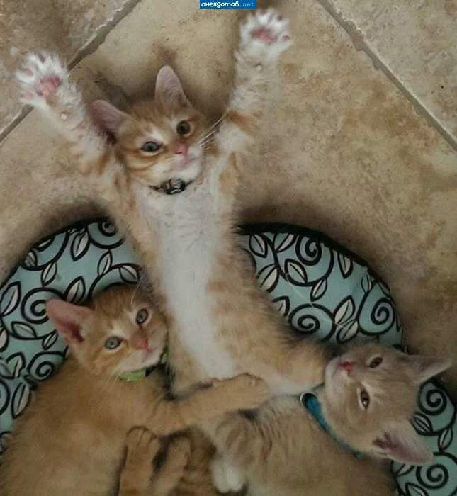 Смешные и забавные кошки: фотоподборка