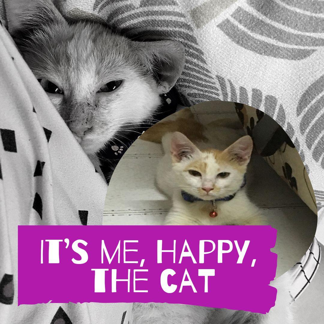 A Cat Named Happy It S Me Happy Kitten Cats Mixed Breed