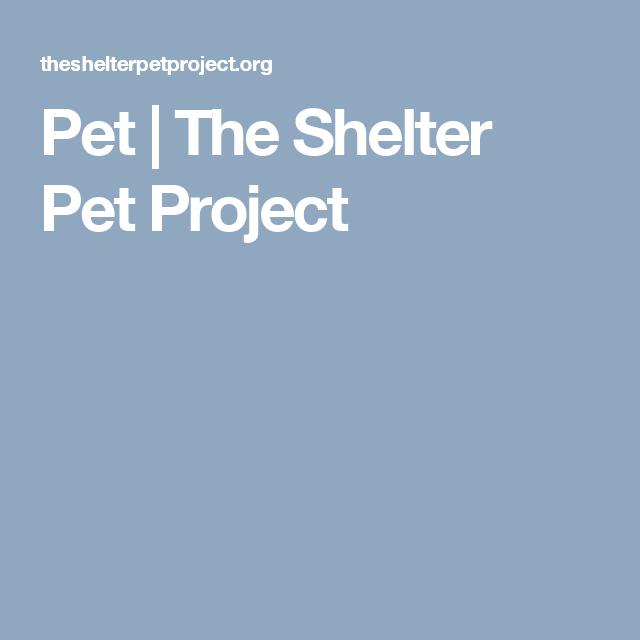 Pet | The Shelter Pet Project
