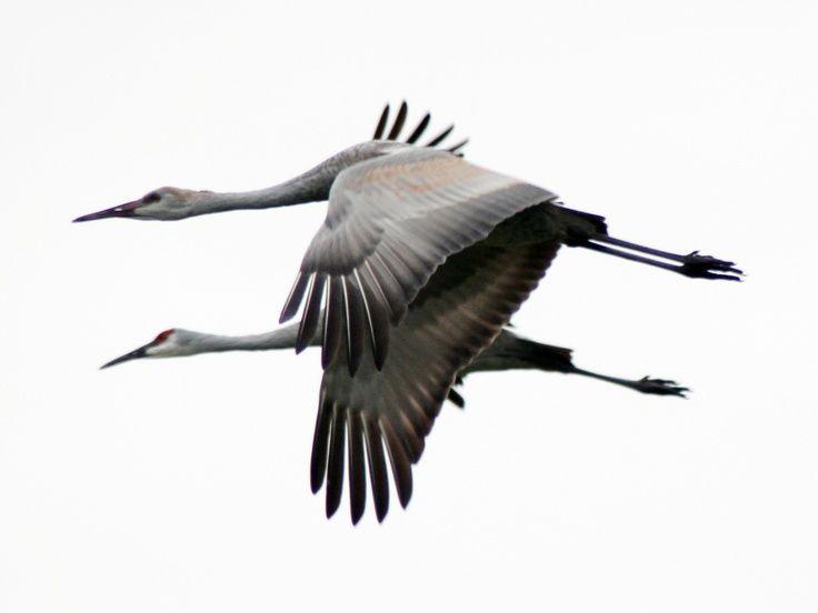 Indiana Backyard Birds   Uploaded To Pinterest