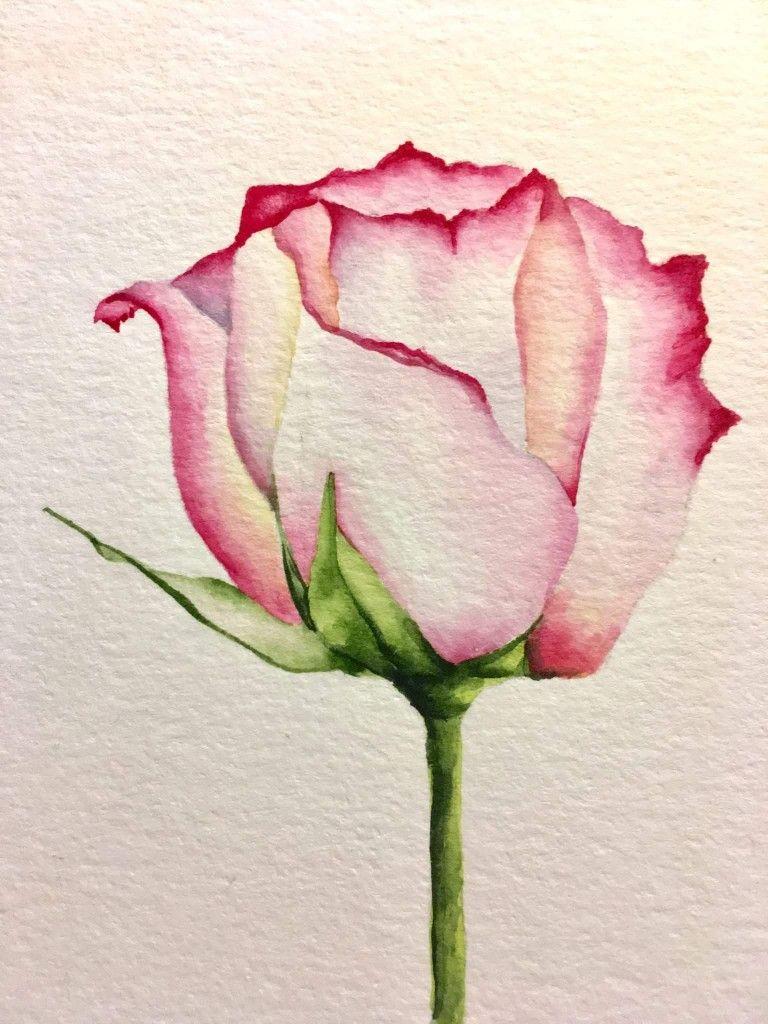 Watercolor Rose Watercolor Paintings Easy Watercolor Rose