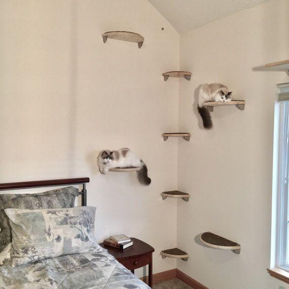 Floating Cat Shelf Set 5pc Hand Carved   2 Oblong Cat Shelves 3 Cat Steps    Pampered Pawz Cat Wall Furniture Collection