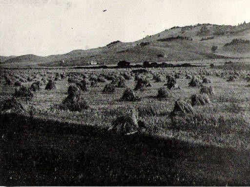 Wheat Stacks in Whitewood, South Dakota