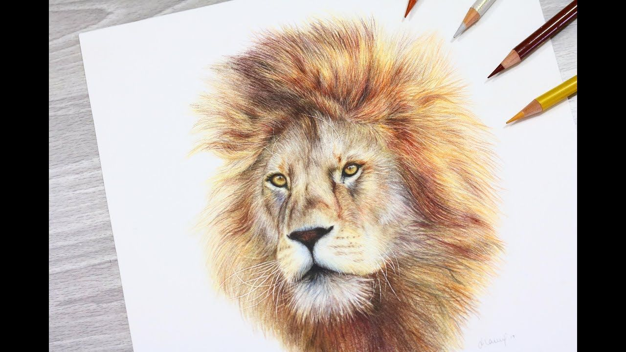 Realtime How To Draw A Lion With Colored Pencil Youtube Drawings Colored Pencils Colored Pencil Drawing Tutorial