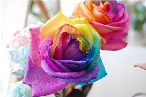 Rainbow Roses, my favorite.