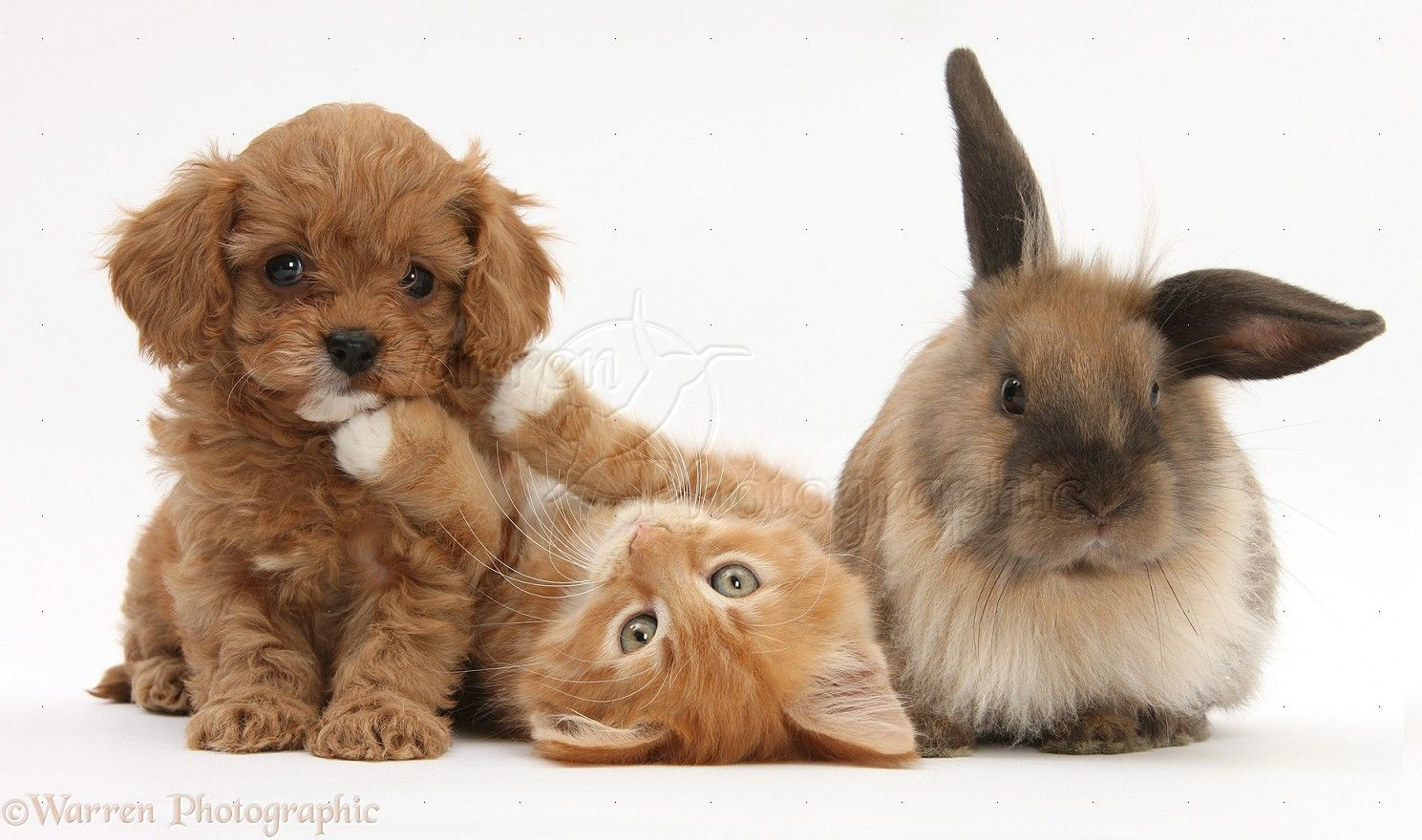cute puppies and kittens - Google Search | cute and more ...