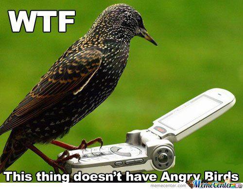 Motmot Bird Meme