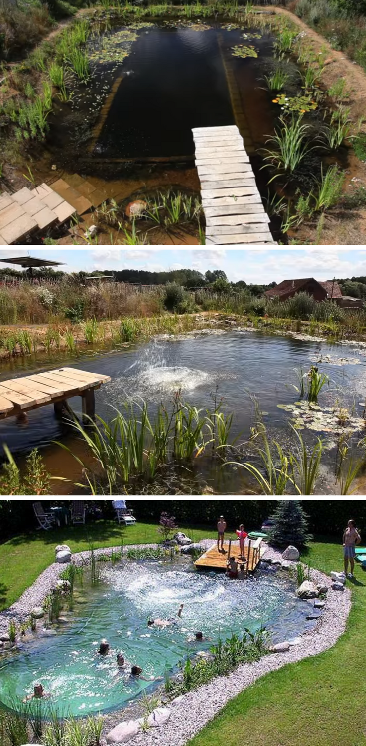 How To Build Your Own Natural Swimming Pool | Piscinas ...