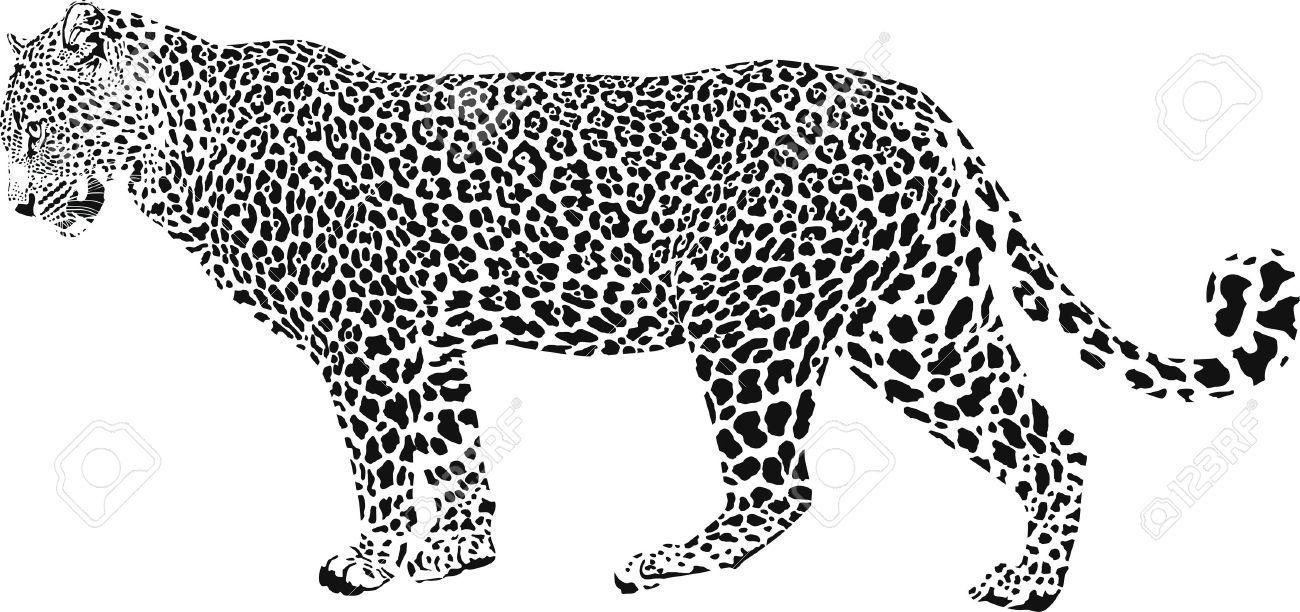 Leopard Black And White Vector Illustration Sun Clip Art Silhouette Png Art Images