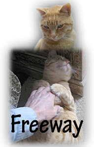Great tips on taming feral cats. i have one that was BORN