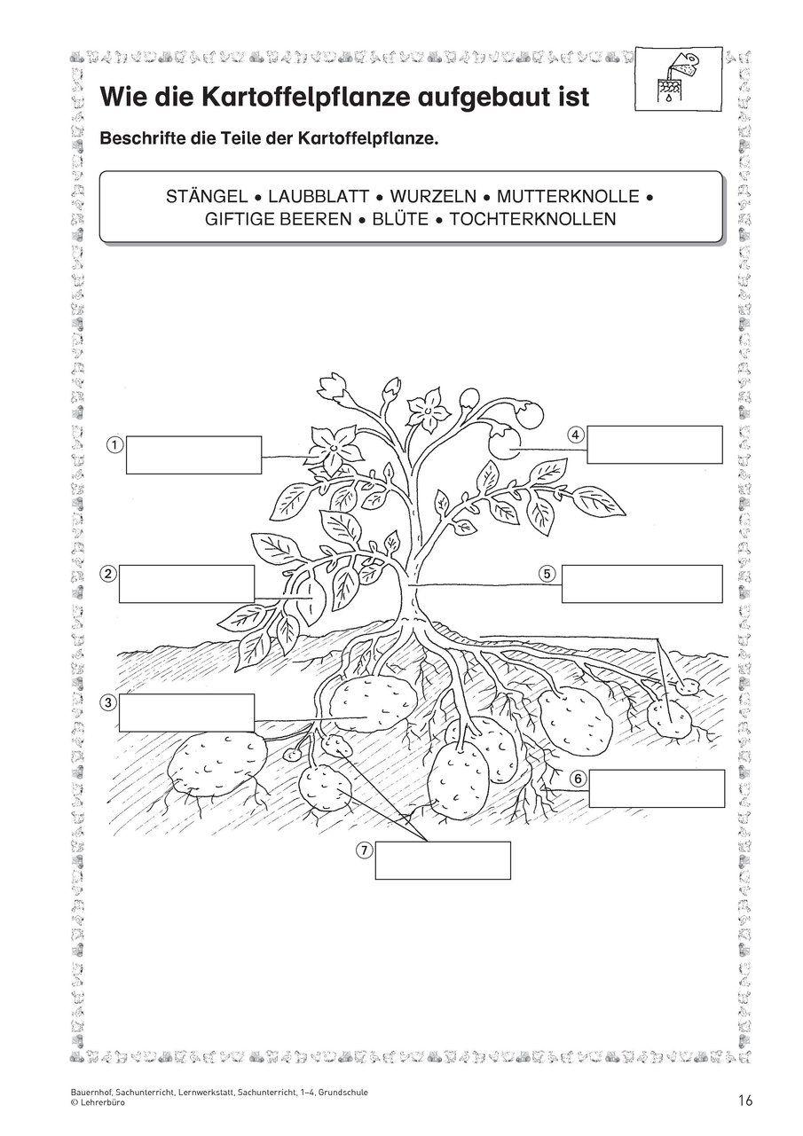 Natur und Leben · Arbeitsblätter · Grundschule · Lehrerbüro ...
