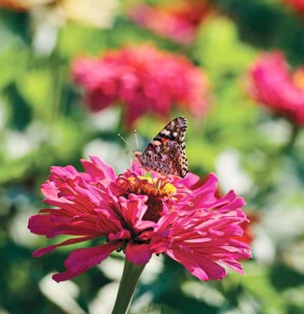How to Attract Butterflies to Your Yard | Midwest Living