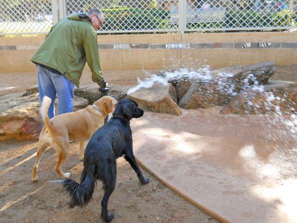Market Square Dog Run Dog Friends Dog Runs Dog Park