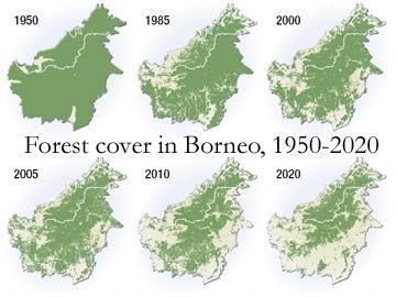 Forest Cover Map In Borneo Island Borneo Rainforest