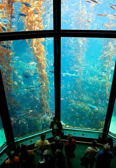 Monterey Bay Aquarium, California This place is AMAZING ...