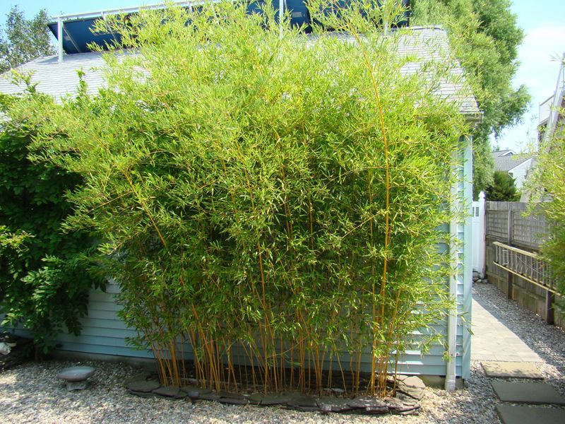bamboo privacy landscape bamboo04
