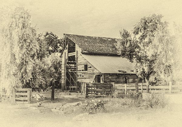Yesterday's Barn is a simple wood frame barn, which is obviously old... A photograph enhanced with a digital treatment to resemble an antique charcoal drawing.