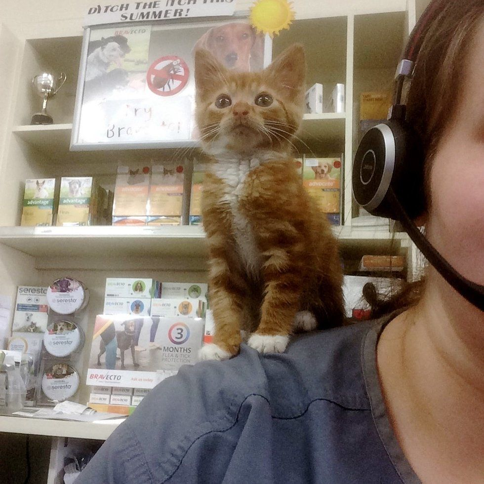 Kitten Who Stays Forever Tiny In Size Is So Happy To Be Loved After Finding A Home Happy Kitten Kitten Ginger Kitten