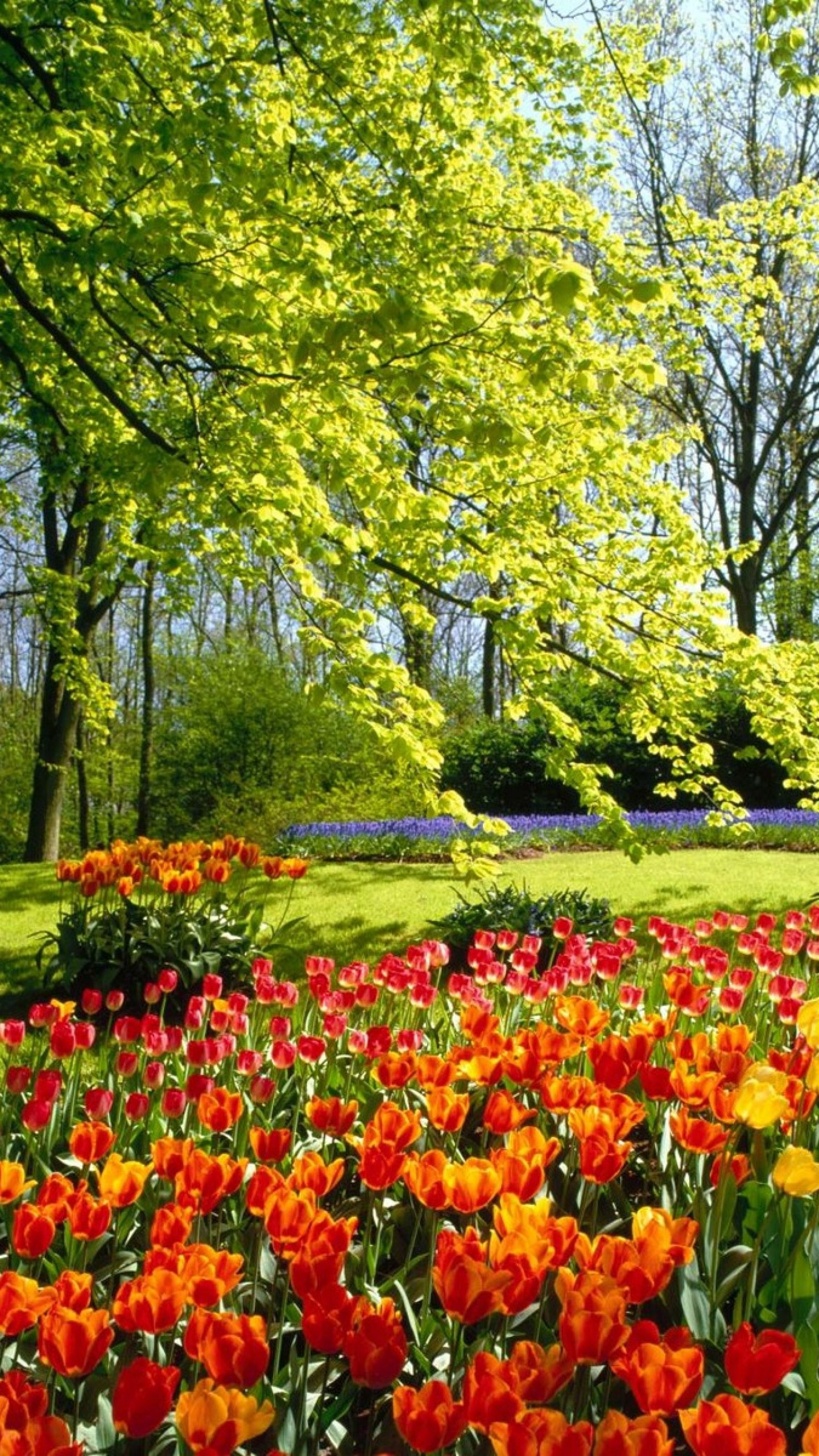 Eleletsitz Tulip Garden Wallpaper Images Beautiful Flowers Garden Beautiful Flowers Wallpapers Spring Nature