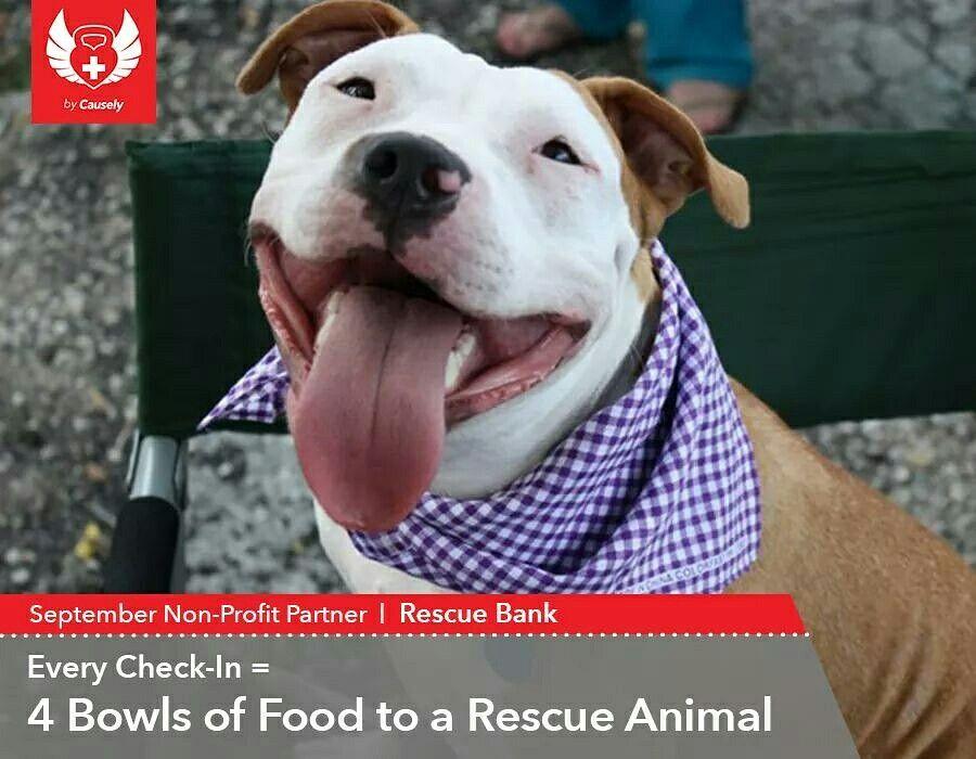 Love4animals animal rescue rescue