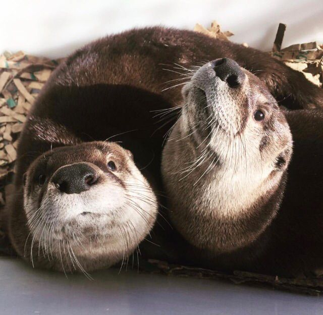 These two are otterly adorable! http://ift.tt/2p7Uakn