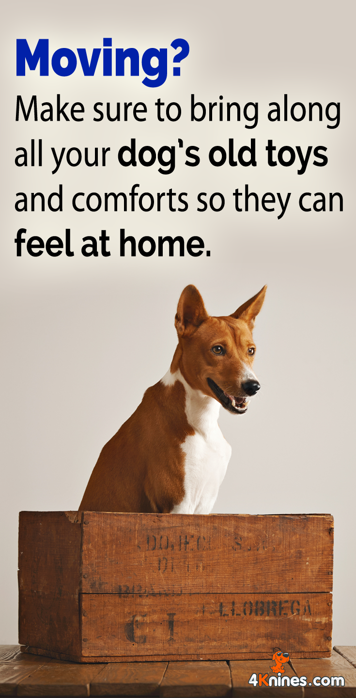 Moving can be a stressful event for your dog. While everything else around them is changing, make sure your dog stays comfortable by giving their favorite items. Bring your dog's old bed, blankets, and toys. You can throw out old items after your dog adjusts.