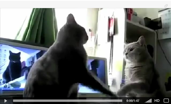 cats playing patty cake french english subtitles