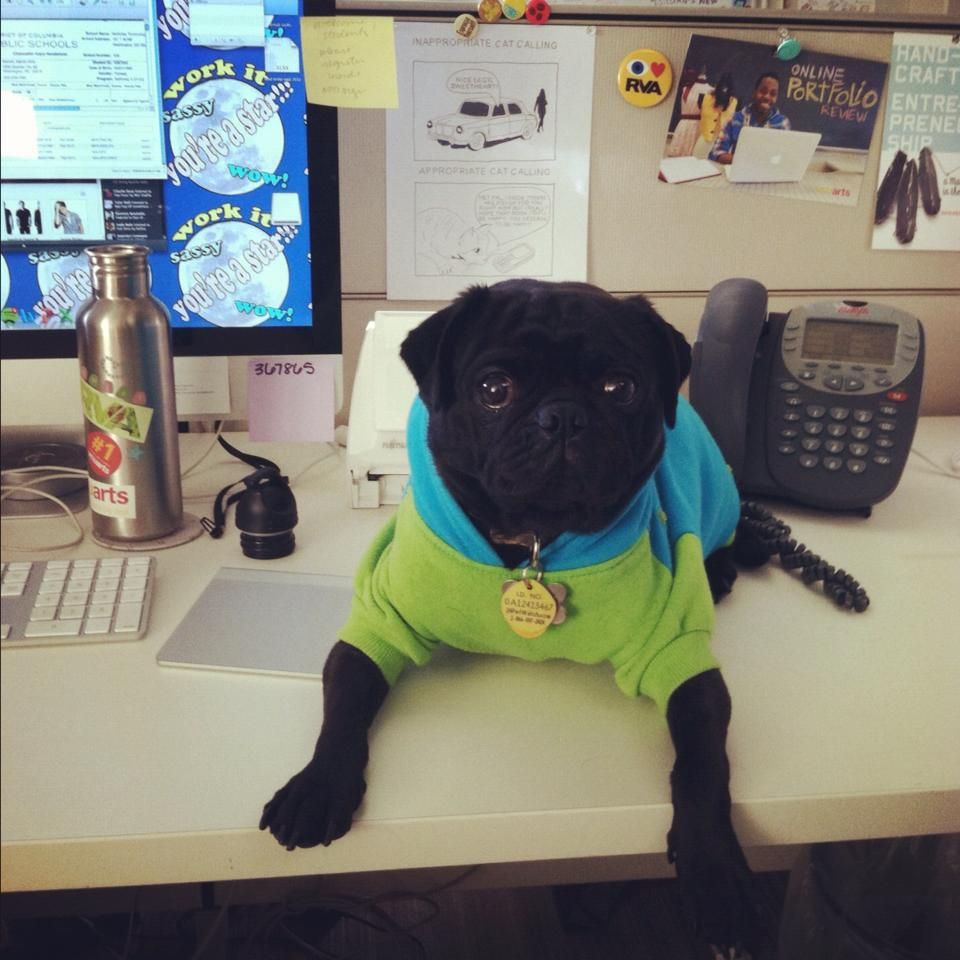 Casual Pugday