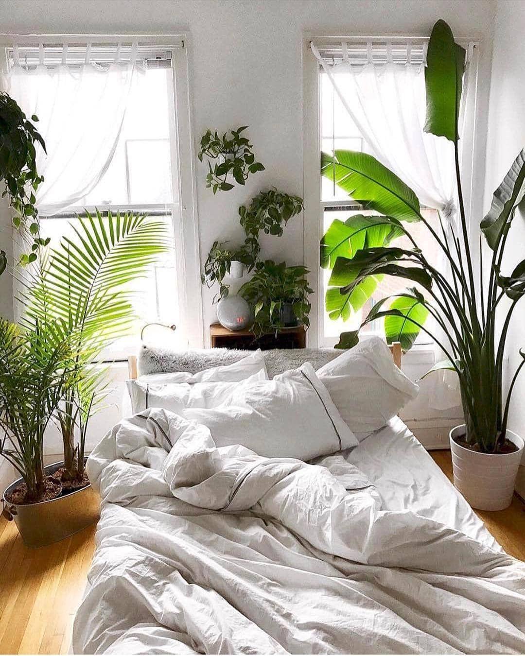 """Photo of Pflanzenfreude.de su Instagram: """"P F L A N Z E N V E R G NÜ G E N // 😍 🌿 Che posto meraviglioso per svegliarti – @helloplantlady ha fatto tutto bene! …"""""""
