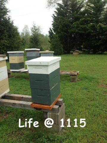 Changes in My Beekeeping Philosophy | Backyard bee, Bee ...