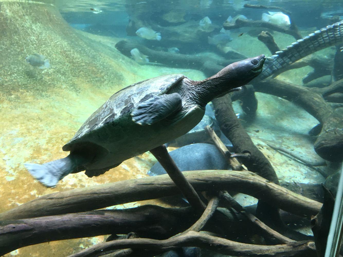 La tortuga es  maravillosa. Me encanta verla nadar. Los invito a observar a una cuando puedan ☺️