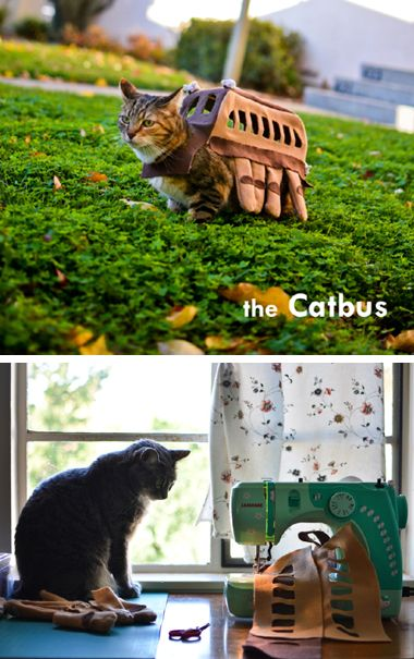 cat bus costume for a cat!! #totoro | Cats bus, Cats, Cute ...