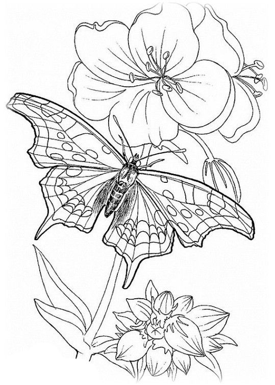 Explore Coloring Pages For Adults Only And More