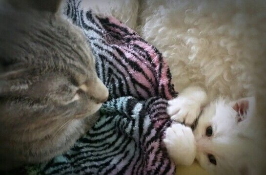 Cats &  kittens peek a boo