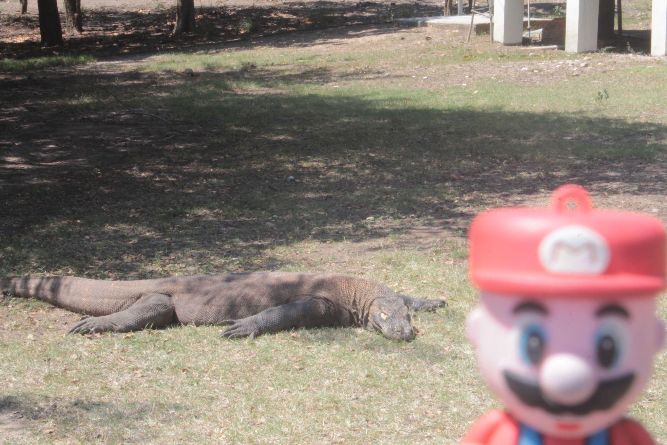 Mario está muy Komodo