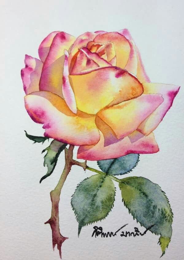 Watercolour Rose Peinture Fleurs Dessin De Roses Aquarelle Fleurs
