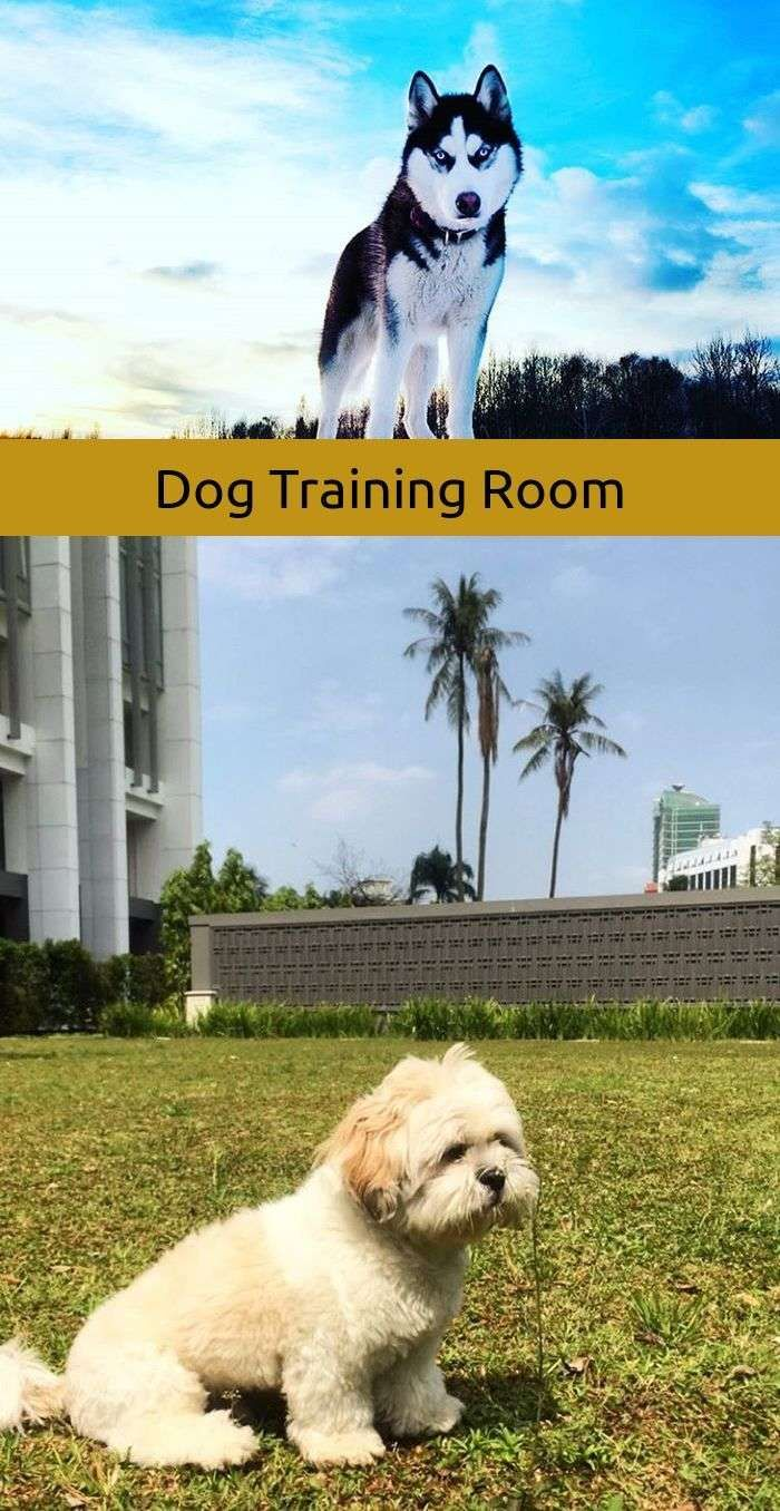 Sociable dog diy natural remedies dog training agility pinterest