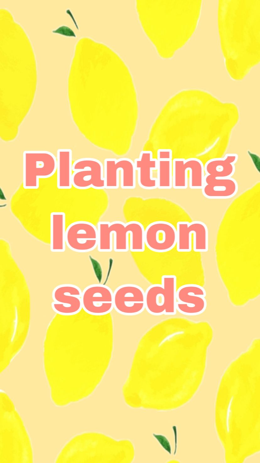 Planting Lemon Seeds!