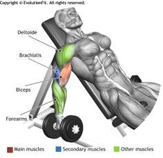 Bizeps Hantelcurls | Bodybuilding | Pinterest | Biceps, Workout and ...