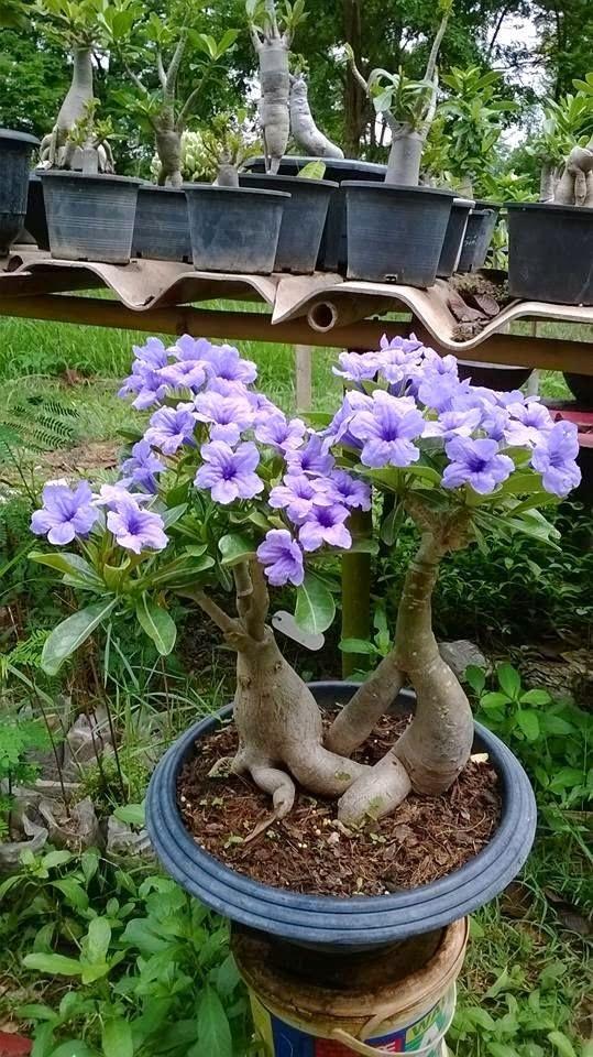 Blog Sobre Plantas Sementes Jardinagem Suculentas Cactos - Flores-de-sombra