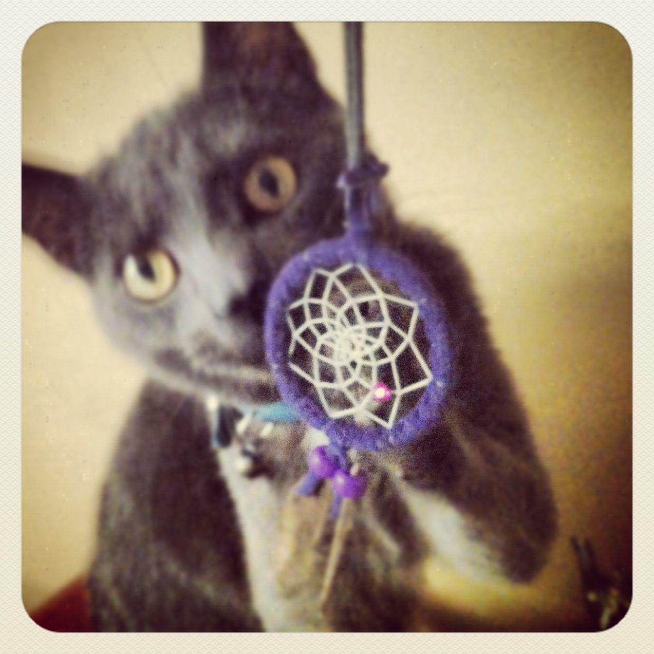 #kitty #cat #native #dreamcatcher #cute #pets