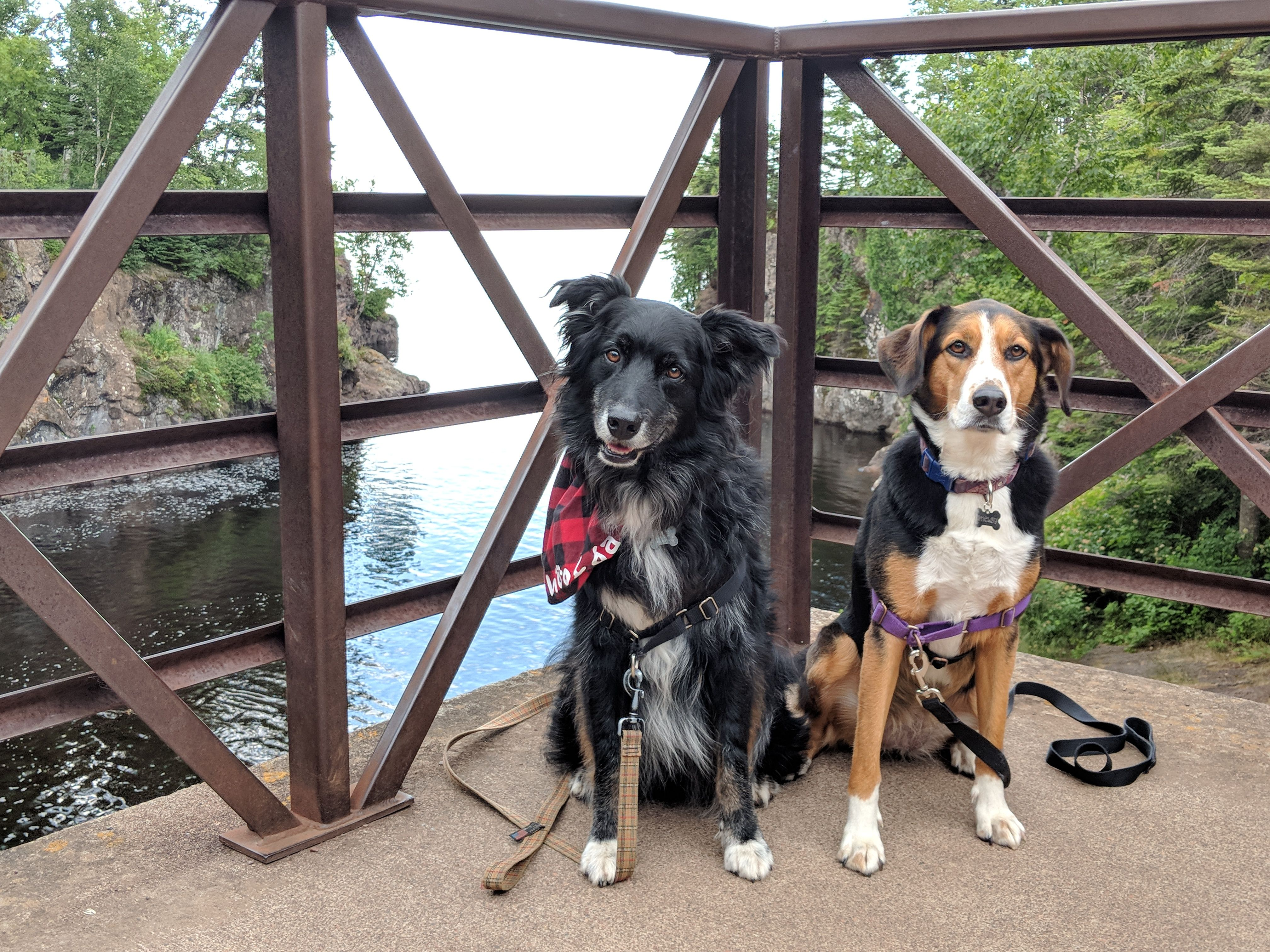 Woofda! A DogFriendly Guide to Minnesota's North Shore