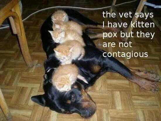 Kittenpox :)