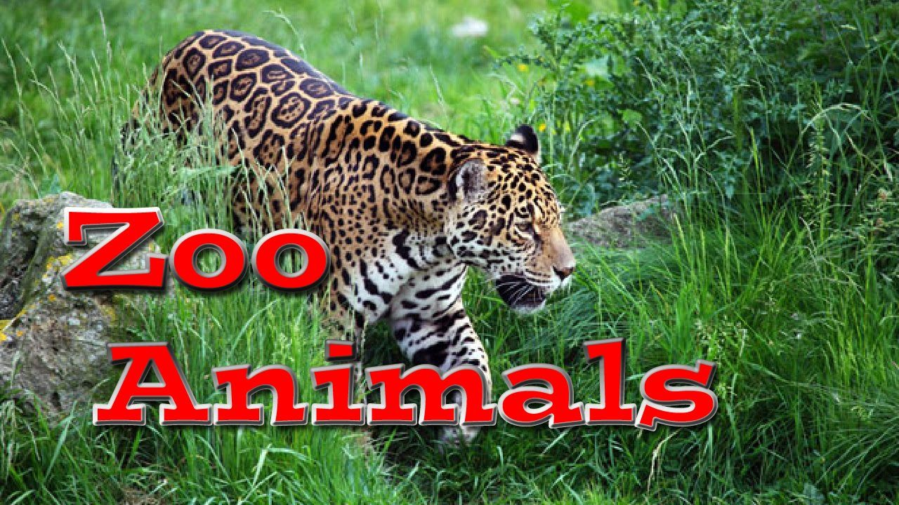 Animal World Zoo Animals for Kids Kids Learning Videos