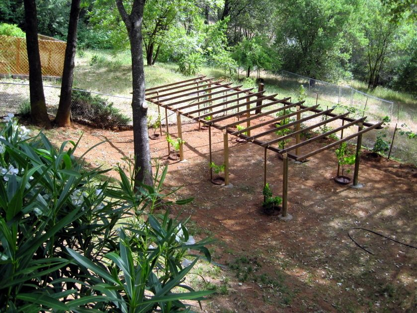 Grape Arbor Plans Bbs Radio Is Going Green And Planting
