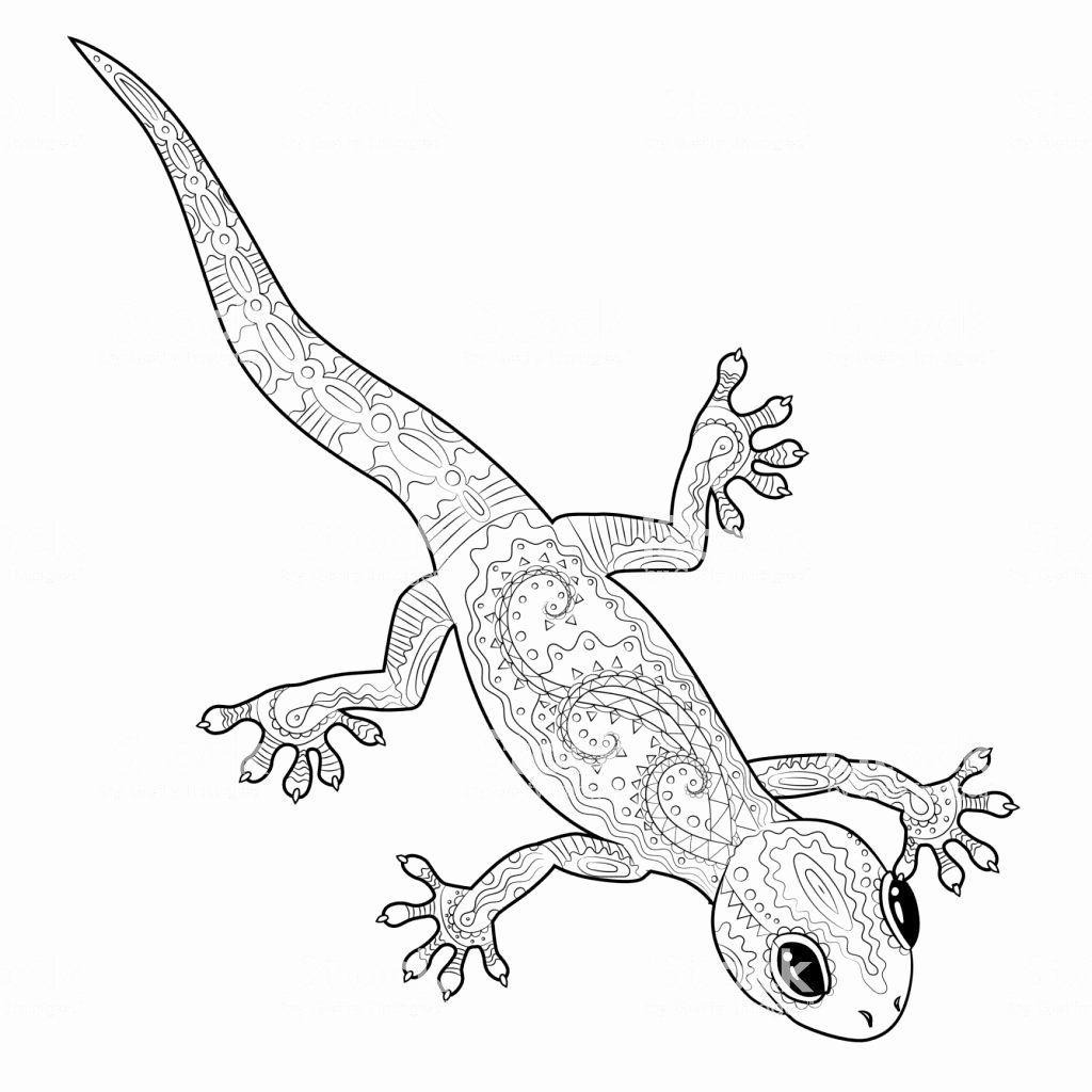 Coloring Cartoon Lizard Elegant Gecko Coloriage Censorpia