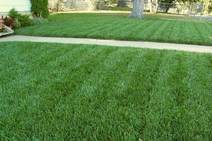 How Do Get Rid Of Crab Grass Tall Fescue Crab Grass Perennial Grasses