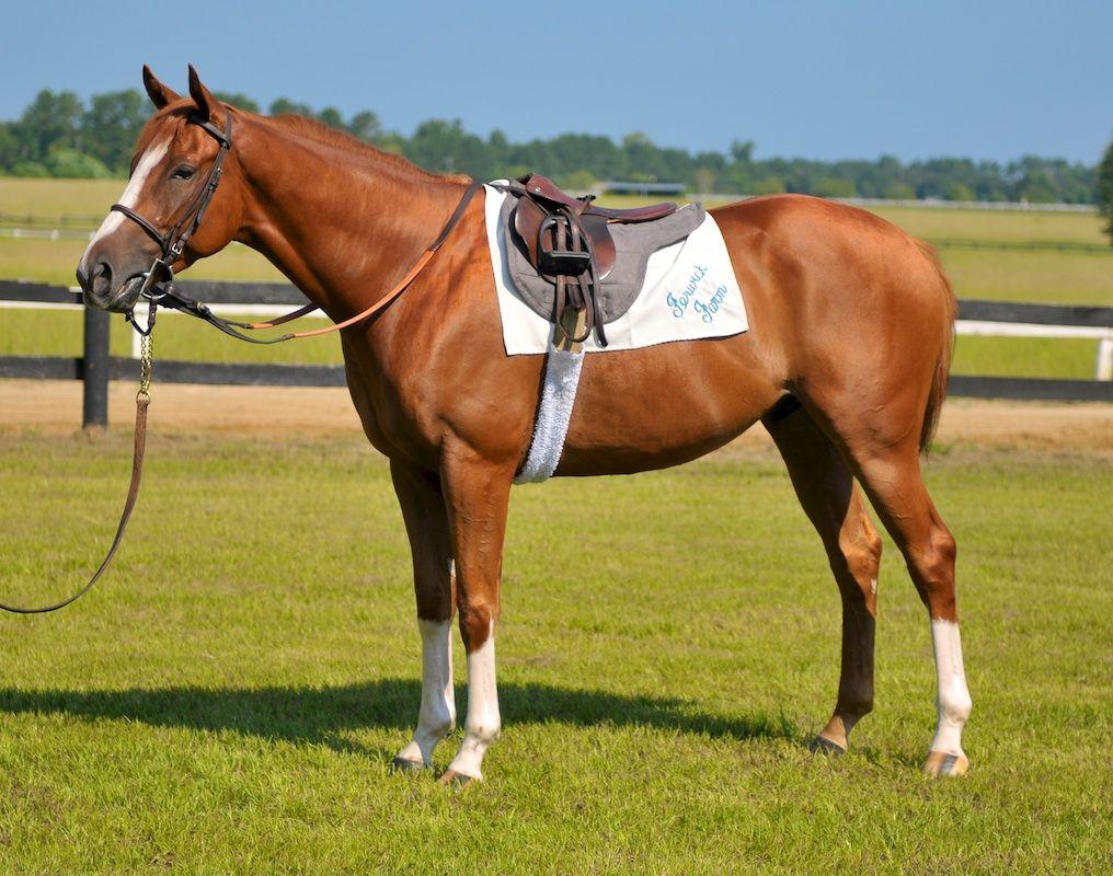 SADDLE HORSE - Google Search | cai de jucarie | Pinterest ...